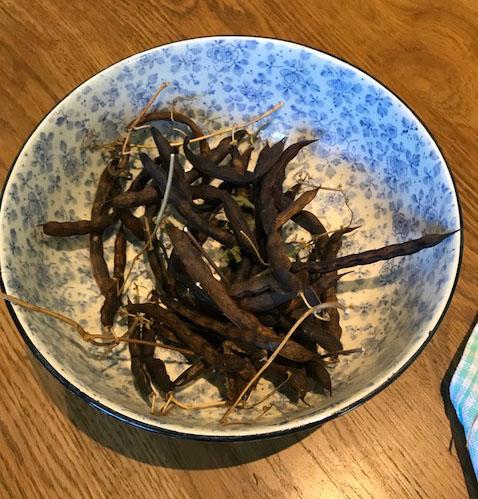 jack-s-beans-harvested.jpg