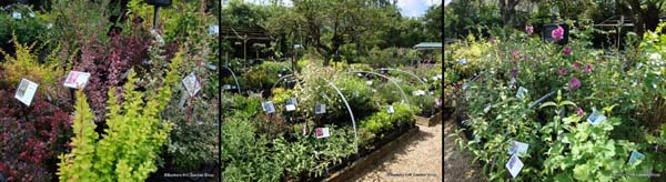 shrub-beds.jpg