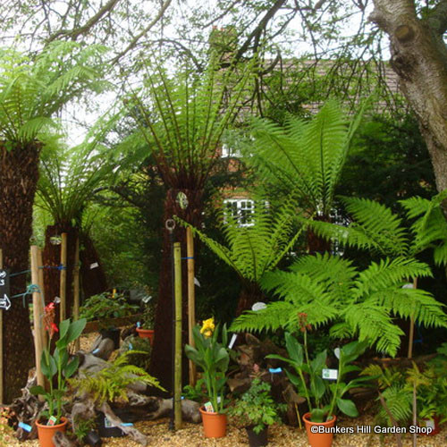 tree-fern-view-square.jpg