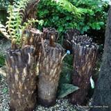 2ft Tree Fern
