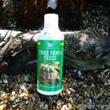 Tree Fern Feed