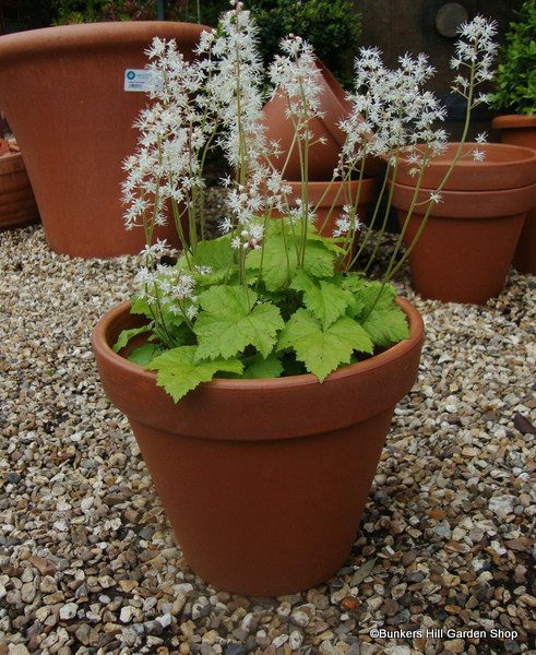 Terracotta Plain Pot - 23cm