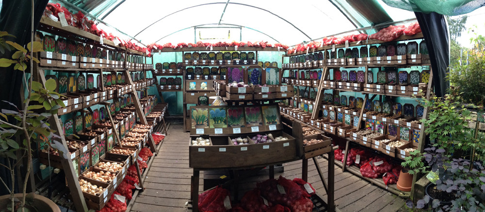 View of the bulbs polytunnel