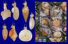 mini-seashell-glass-ornaments-icon