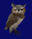 Large Speckled Furry Hoot Owl Figurine