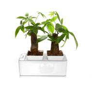 Mocle Zerosoil Smart Mini Garden
