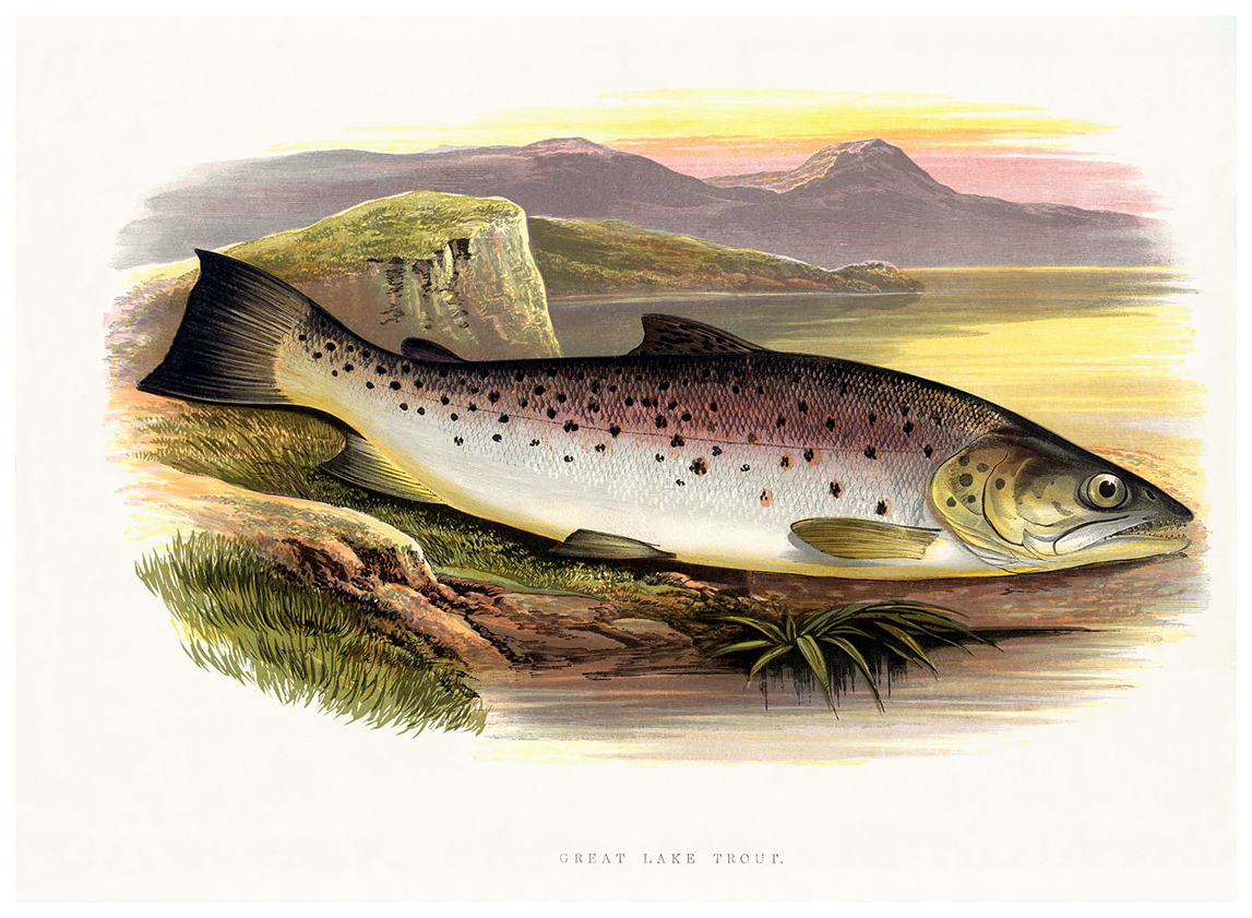a-great-lake-trout.jpg