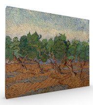 Olive Grove by Vincent van Gogh Stretched Canvas
