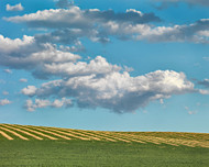 Cloud and Field by Jeff Grant Landscape Print