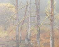 Tumba 19 by Jeff Grant Landscape Print