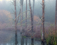 Tumba 45 by Jeff Grant Landscape Print