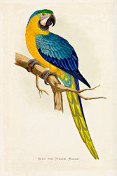WT Greene Parrots in Captivity Blue and Yellow Macaw Wildlife Print