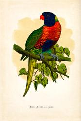 WT Greene Parrots in Captivity Blue Mountain Lory Wildlife Print