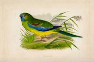 WT Greene Parrots in Captivity Turquoisine Wildlife Print