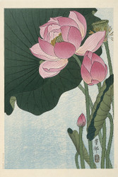 Blooming Lotus Flowers by Ohara Koson  Floral