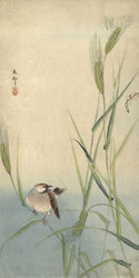 Bird and Butterfly by Ohara Koson Japanese Woodblock