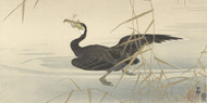 Cormorant with Fish by Ohara Koson Japanese Woodblock