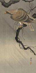Eagle on Branch by Ohara Koson Japanese Woodblock