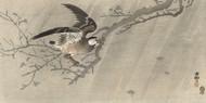 Gray Starling in Storm Ohara Koson Japanese Woodblock