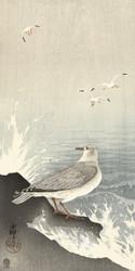 Gull on Rock by Ohara Koson Japanese Woodblock