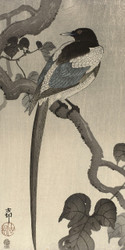 Magpie on Tree Branch by Ohara Koson Japanese Woodblock