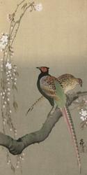 Pheasants and Cherry Blossom II by Ohara Koson  Japanese Woodblock