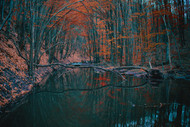 Landscape Print MPA010053