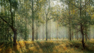 Landscape Print MPA010866