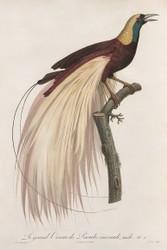 Le Grand Oiseau De Paradis Emeraude Male by Jacques Barraband