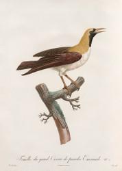 Femelle Du Grand Oiseau De Paradis Emeraude by Jacques Barraband