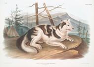 Canis Familiaris By John Audubon