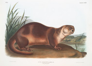 Lutra Canadensis By John Audubon