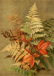 Autumn Ferns By Ellen T Fisher Floral Print