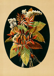 Autumn Leaves And Goldenrods  By Louise Whitelock Clarkson Floral Print