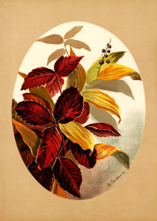 Autumn Leaves Oval Shapes  By Louise Whitelock Clarkson Floral Print