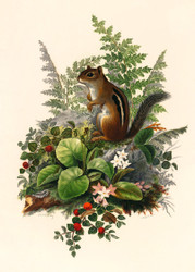Chipmunk  By Olive E Whitney Floral Print