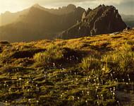 Western Arthur Range by Peter Dombrovskis