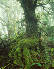 Myrtle by Peter Dombrovskis