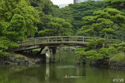 Tokyo Afternoon Tour - Child
