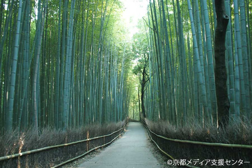 Arashiyama Afternoon Tour - Adult