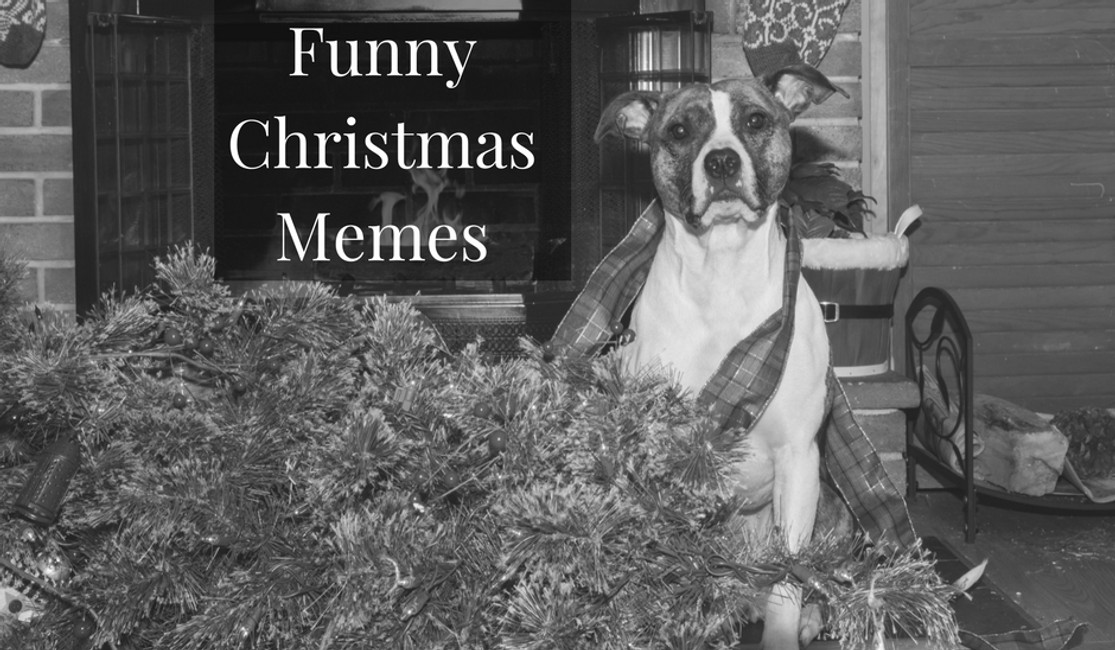 7 Funny Christmas Memes to make you laugh