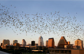 Austin - Austin Bat Flight