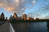 Congress Avenue Bats