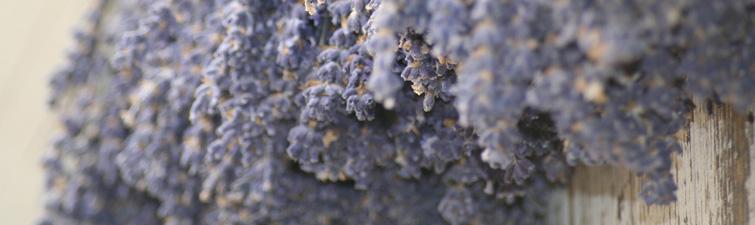 lavendar-minor-banners.jpg