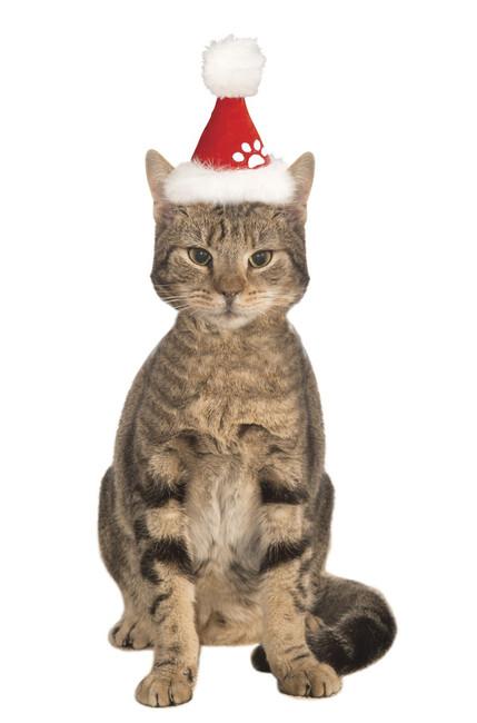 Santa Claus Pet Hat