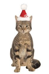 Santa Pet Hat