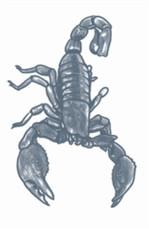 Scorpion Prision Temporary Tattoo