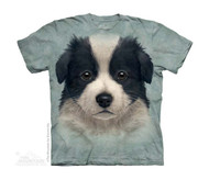 BORDER COLLIE PUPPY - CH