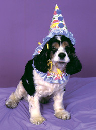 For the pup who loves to clown around! Festive and colorful clown hat with ruffle collar.