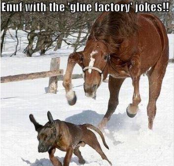 Glue Factory Jokes